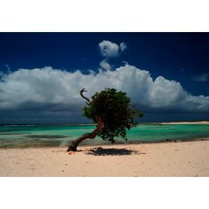 ARUBA BEACH - Print pe canvas natural fotografie proprie 70 x 50 cm